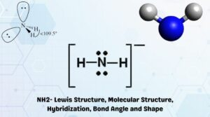 NH2- Lewis Structure, Molecular Structure, Hybridization, Bond Angle and Shape